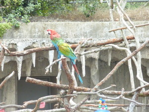 sfzoo_parrot