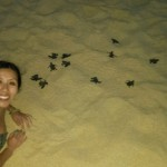 Sea_Turtle_Jen