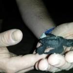 Sea_Turtle_Closeup